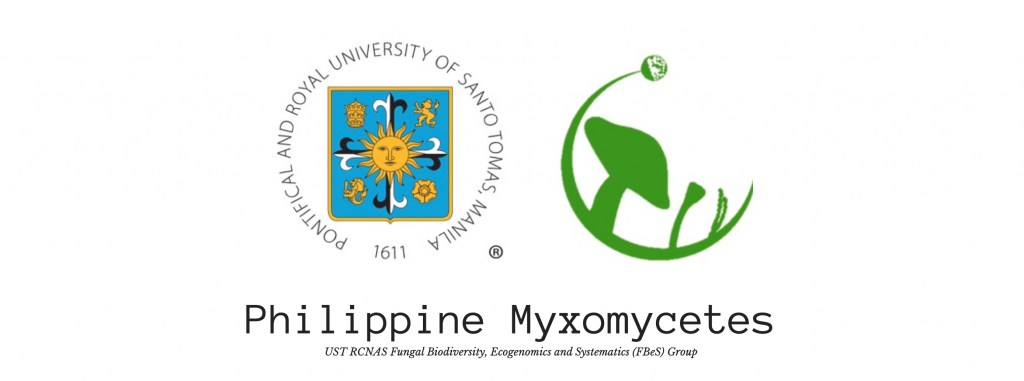 UST's Fungal Biodiversity, Ecogenomics, and Systematics (FBeS) group publishes one-stop-shop info site on Philippine slime molds